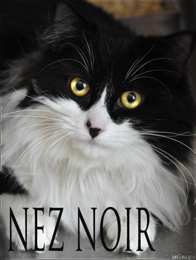 Nez Noir || Apprenti du Clan de l'Ombre || Libre. Nez_Noir