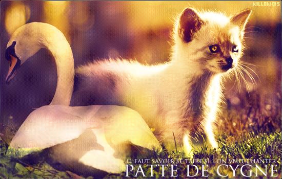 Petit Paon et Patte de Cygne    Chatons du Clan de l'Ombre    Libres. Patte_de_Cygne
