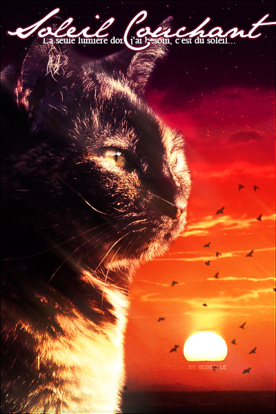 Soleil Couchant - femelle - 35 lunes  -  Ombre [LIBRE] Soleil_Couchant
