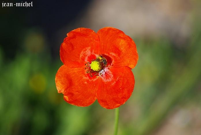 La Fleur et l'Abeille dans Photos divers