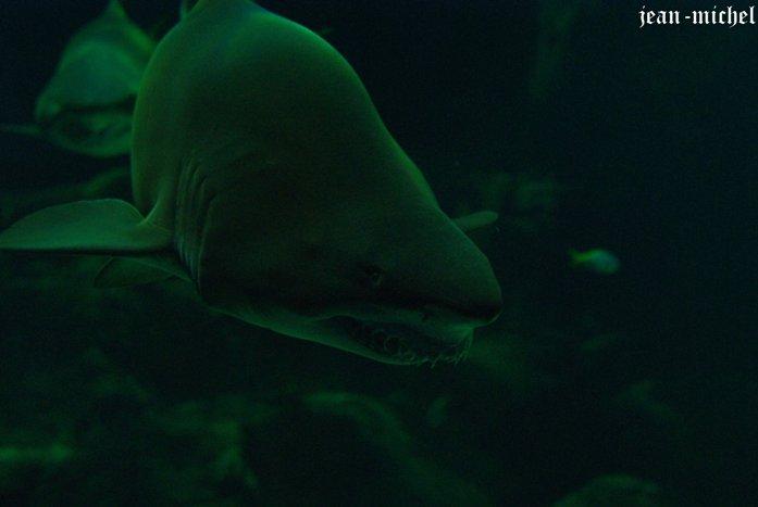 Aquarium dans Animaux