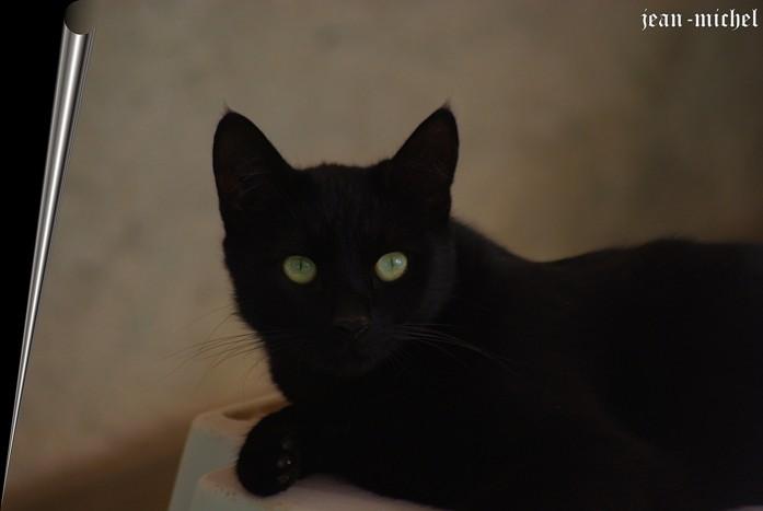 Le Chat Noir dans Animaux