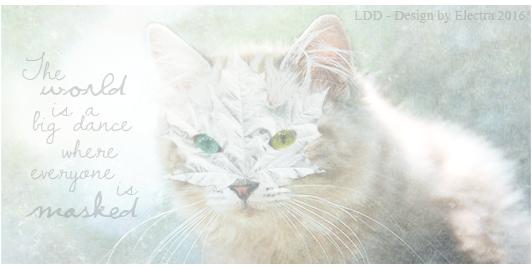 Electra's Light [Fermé] LDD_masked_cat
